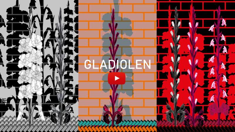 screenshot gladiolen b.png